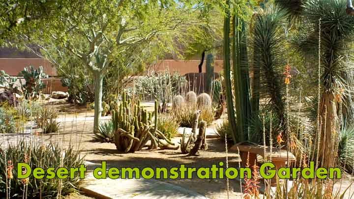 Desert Garden Image